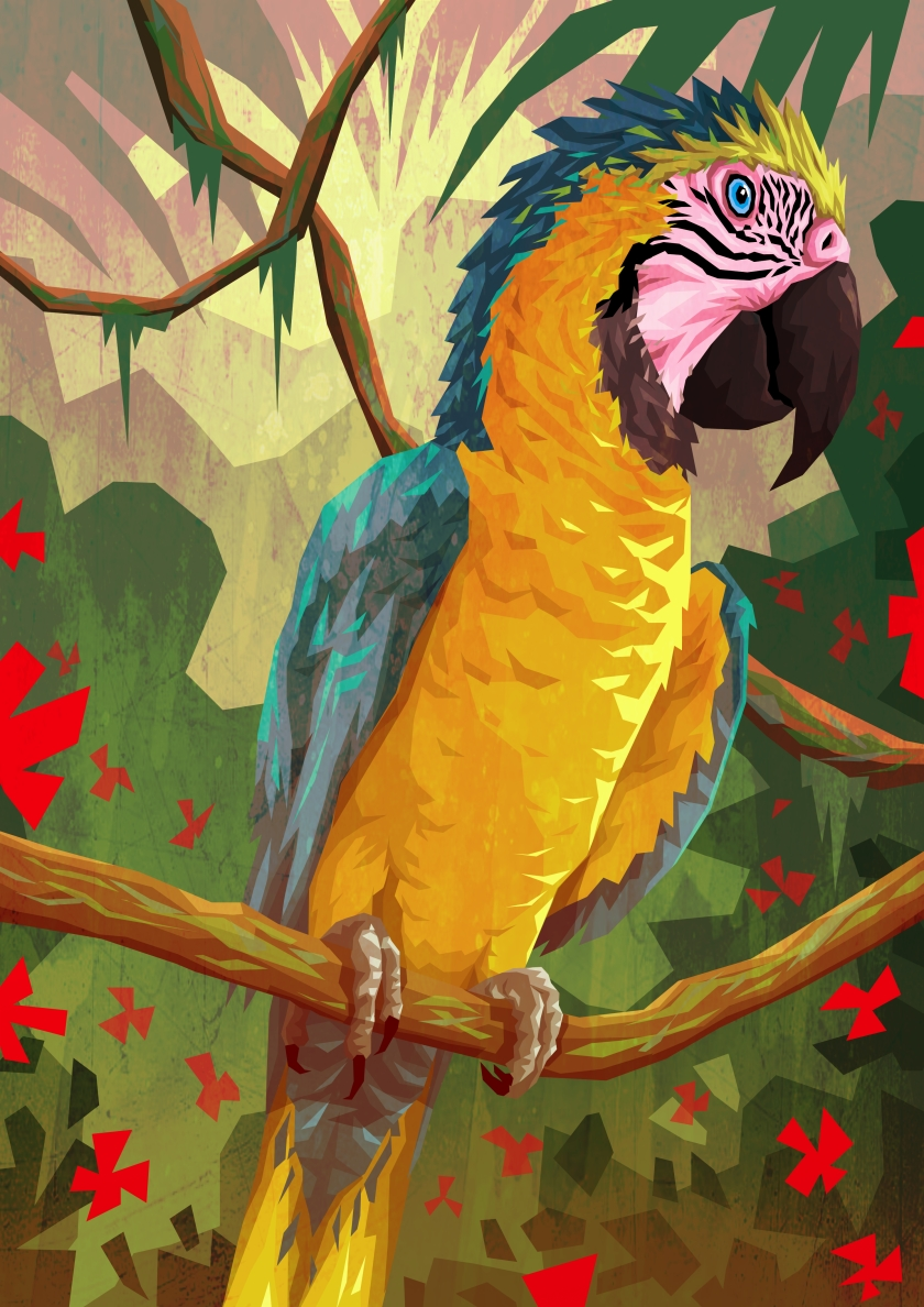 south america blue and yellow macaw sketch